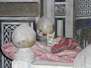 Cats on a Sultan's mosque grave from the city of the dead